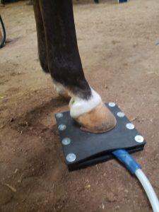 Magna waving horse hoof